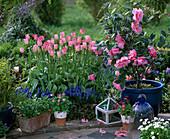 Beet mit Tulpen und Kamelie