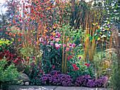 Herbstliches Terrassenbeet: Dahlia (Dahlie), Aster