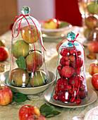Malus (Apfel, Zieräpfel), rote und grüne Äpfel unter Glasglocken