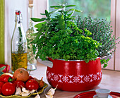 Petroselinum (Petersilie), Salvia (Salbei), Thymus (Thymian) in rotem Topf