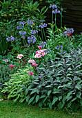 Beet mit Salvia 'Purpurascens' 'Icterina' (buntblättriger Salbei),