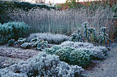 FROSTED CABBAGES, Verbena BONARIENSIS AND Box BALLS IN THE POTAGER at THE LANCE HATTATT DESIGN Garden at ARROW Cottage, Herefordshire