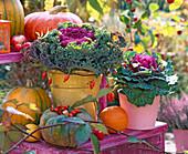 Brassica (cabbage), Cucurbita (pumpkin), Rosa (rosehip), Rubus
