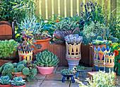 Arrangement aus Echeveria, Sedum, Sempervivum, Aeonium und Euphorbia