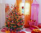 Weihnachtsbaum aus Picea pungens 'Glauca' (Stechfichte)