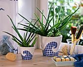 Aloe vera in weißen Töpfen, die mit Wellen verziert sind