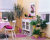 Eßzimmer mit Dracaena marginata 'Bicolor', Dracaena reflexa