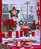Weihnachtlich dekoriertes Fenster mit Euphorbia pulcherrima