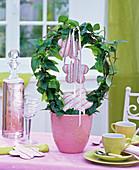 Hedera (Efeu) rundgezogen in rosa Übertopf