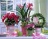 Arrangement von Pflanzen die wenig Wasser brauchen