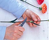 Stengel von Dianthus (Nelken) mit dem Messer schräg anschneiden