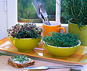 Gelbe Schalen mit Raphanus (Radieschen) und Lepidium (Kresse)