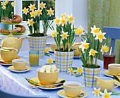 Tischdekoration mit Narcissus (Narzissen) in karierten Übertöpfen