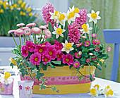Jardiniere mit Bellis (Tausendschön), Primula (Primeln), Narcissus