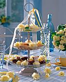 Blüten von Primula Belarina 'Cream' (gefüllte Primeln) auf Etagere mit Keksen