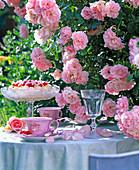 Gedeckter Kaffeetisch an Rosa 'Climbing Bonica' (Kletternde Kleinstrauchrose)