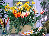 Tulipa 'Flair' 'The First' (Tulpen), Narcissus 'Jetfire' 'Minnow' (Narzissen