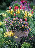 Große Vase mit Viola Twix 'Lavender Yellow Face' (Hornveilchen)