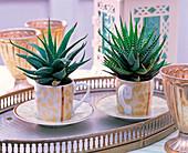Shin Yong Metall: Aloe in Espressotassen auf Metalltablett, silberne Becher