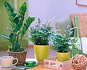 Shin Yong Holz: Zamioculcas, Pteris (Saumfarn) auf dem Tisch