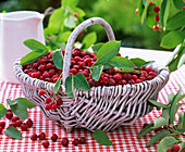 Basket with berries of Amelanchier (rock pear), leaves