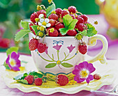 Fragaria in coffee mug, blossom