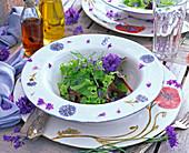 Lactuca (Salat), Blüten von Centaurea (Kornblumen), Anethum (Dill)