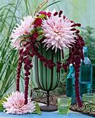 Dahlia 'Peppermint' (Dahlien), Amaranthus (Fuchsschwanz)