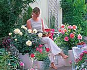Rosa 'Ambiente' 'Inspiration' (Edelrosen von Noack)