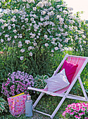 Klappliegestuhl vor Rosa multiflora (Wildrose), Pelargonium Angeleyes
