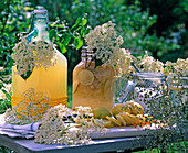 Elderberry lemonade in bottles, flowers of sambucus, citrus