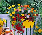 Gelber Metallkasten mit Tagetes (Studentenblumen)