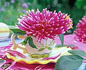 Blüte von Dahlia (Kaktusdahlie) in bemalter Tasse, Blütenblätter
