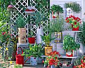 Kräuter und Gemüse in Blechdosen und emaillierten Gefäßen