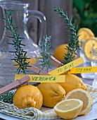 Zweige von Rosmarinus (Rosmarin) in Citrus (Zitronen) gesteckt
