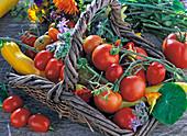 Lycopersicon (Tomaten), Cucurbita (Zucchini), Capsicum (Peperoni)