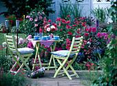 Sitzplatz am Terrassenbeet mit Dahlie (Dahlien)