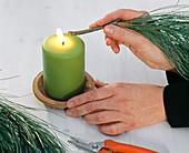 Pinus strobus (Kiefer), Zweig abflammen um Harzaustritt zu stoppen