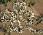 Kleeblatt aus Gypsophila / Schleierkrautherzen