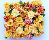 Freisteller aus Rosa (gelbe, orange und geflammte Rosenblüten)