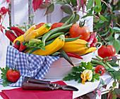 weiße Wanne mit Cucurbita (Zucchini), Capsicum (Peperoni), Lycopersicon