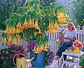 Frau auf Balkon mit blühender gelber Datura (Engelstrompete)