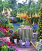 Terrasse mit Datura in gelb und rosa