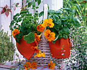 White basket with herbs