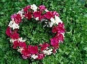 Kranz aus Flammenblumen, Hortensienblüten und Strandflieder