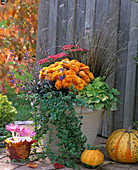 Kübel mit Chrysanthemen und Herbstzauber bepflanzen: 3/3