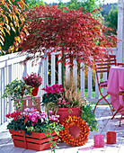 Roter Herbstbalkon