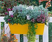 Artemisia absinthium 'Lambrook Silver' (Edelraute), Calluna