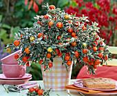 Herbst Früchte Beeren Topf Tisch