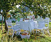 White sofa under malus (apple tree)